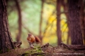 On The Forest Floor by Michael McIlvaney