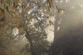 Early-Morning-Mist-by-Jenny-Webster