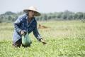 Hoang Farmworker by John Davidson