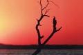African-Sunset-by-Pat-Billyard