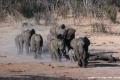 Elephant-Herd-by-Roger-Tyler