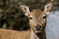 Deer-by-Rebekah-Nash