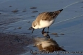sandling_at_sea_edge