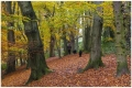 carpet_of_leaves