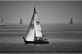 Perfect Sailing Day - Janice Harris