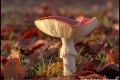 Fly-Agaric-by-Jan-Harris