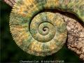JulieHall_ChameleonCurl