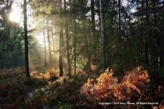 1-Sunlight-on-Bracken