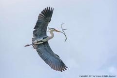 Heron-by-Sue-Vernon