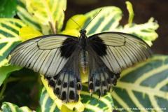 Butterfly-2-by-John-Harris