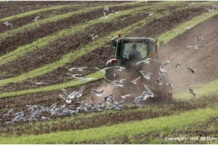 Autumn-Ploughing-by-Jill-Howe