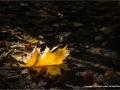 Leaf by Ruth Seadon
