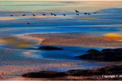 Migration-by-Len-Pugh
