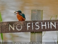 JulieBridgwater_KingfisherWithFish