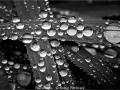RobinPotticary_Raindrops