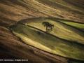 Lone Tree by John Davidson