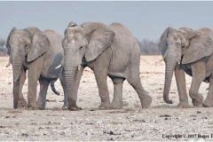 Elephant-Herd-by-Roger-Tyler
