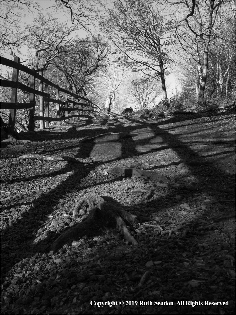 Walking the shadow lines by Ruth Seadon