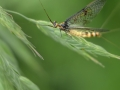 MikeChilds_Mayfly
