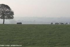 Deer-at-Dusk-by-Pauline-Grainger
