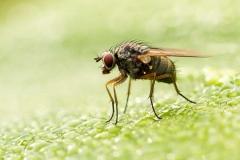 Fly-on-Leaf