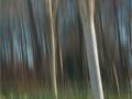 Side lit Birch by Ruth Seadon