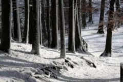 shadows_in_a_swiss_forest