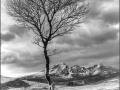 Wintering-Silver-Birch