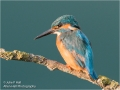 Kingfisher-4