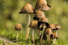 Capped-Mushrooms-by-Rebekah-Nash
