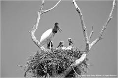 Family-Tree-by-Jenny-Webster
