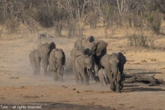 To-the-Waterhole
